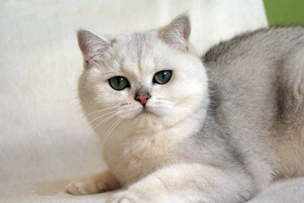 veľké mačička sex pics