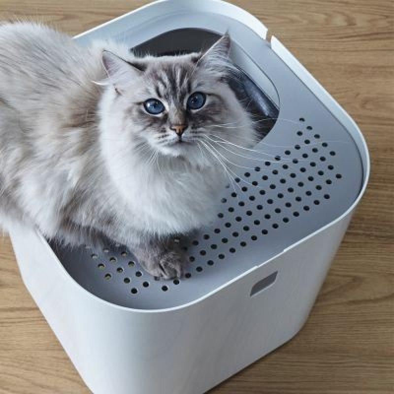 veľké tvrdé mačička