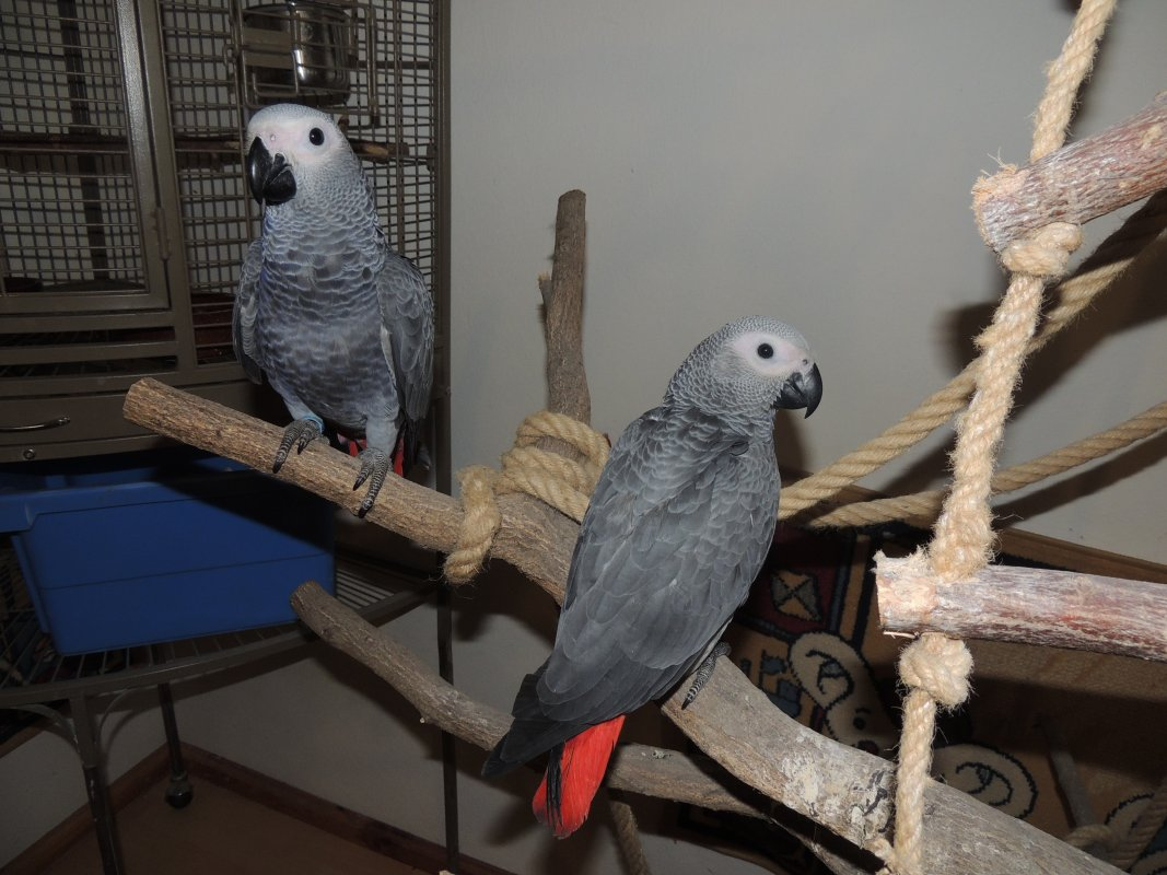 horúce mláďatá milujú veľké vtáky