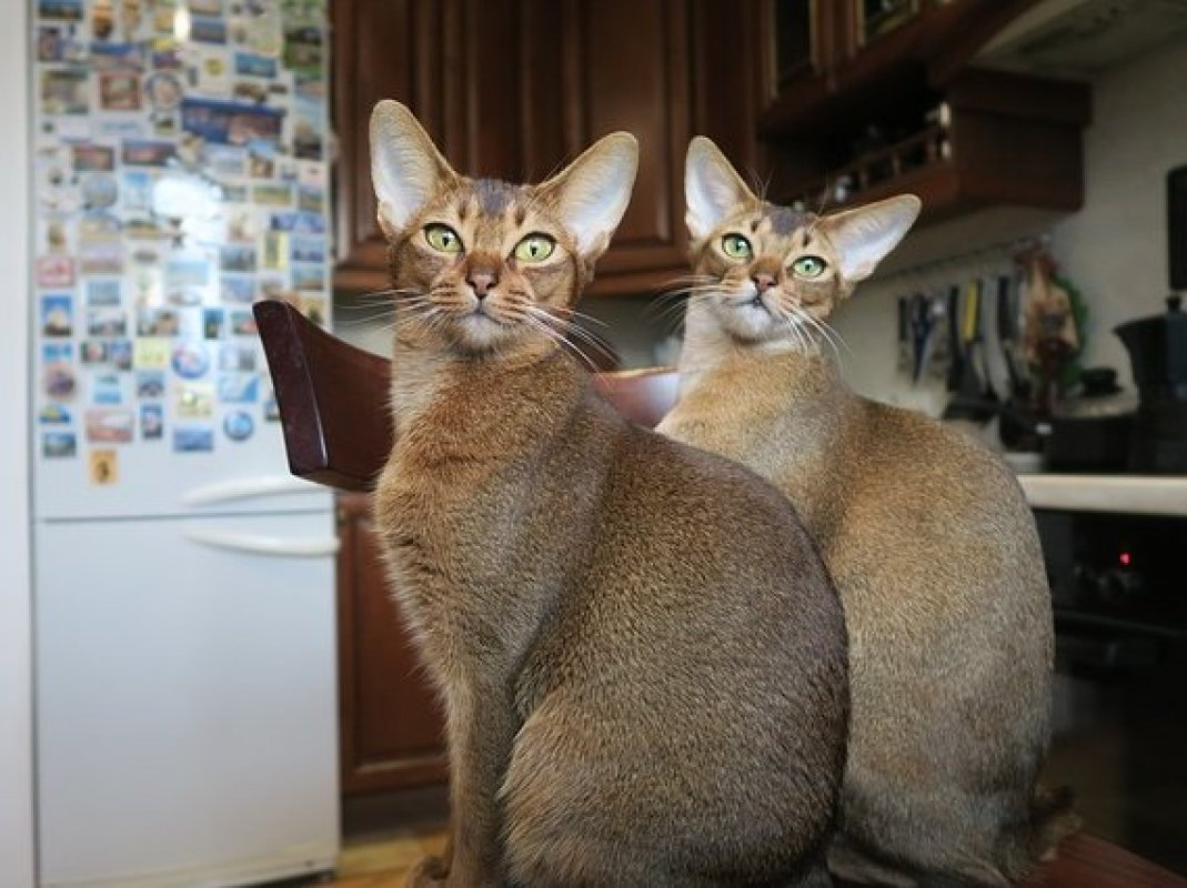 africké mačička pics zadarmo porno Movil