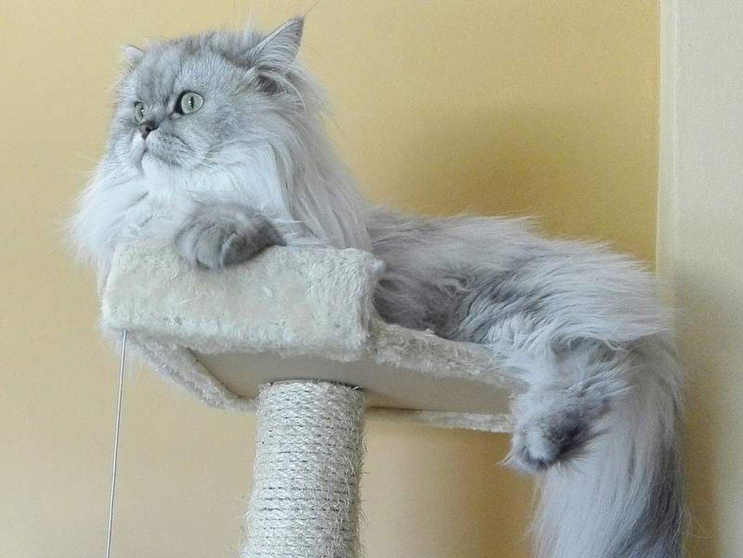 divoké mačička hrať poradenstvo o tom, že hlava