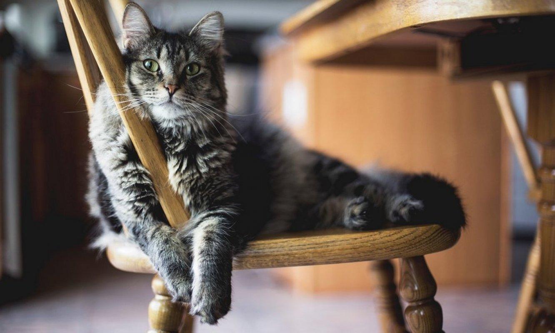 Nové tesné mačička
